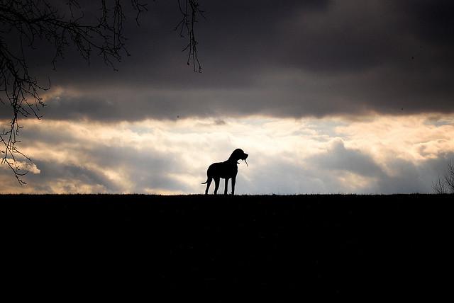 hound1